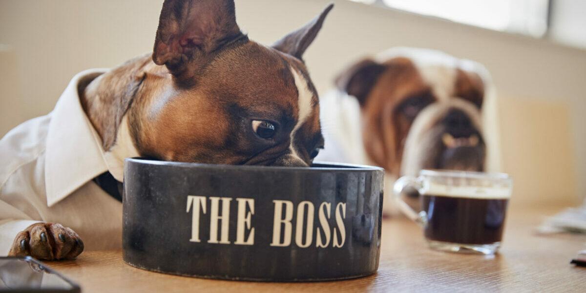 Waarom je niet áltijd je baas vóór moet laten gaan