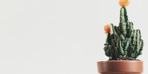 Waarom het zo'n goed idee is om planten in huis te hebben
